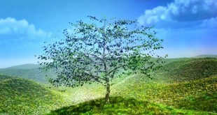 Doğa ve Ağaç